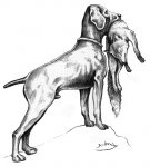 Sperlingshund 135x150